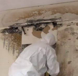 long-island-mold-removal